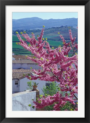 Framed Flowering Cherry Tree and Whitewashed Buildings, Ronda, Spain Print