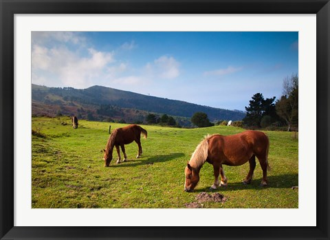 Framed Horses By Jaizkibel Road, Hondarribia, Spain Print