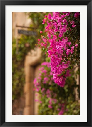 Framed Flower-covered Buildings, Old Town, Ciudad Monumental, Caceres, Spain Print