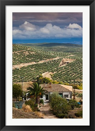 Framed Olive Groves, Ubeda, Spain Print