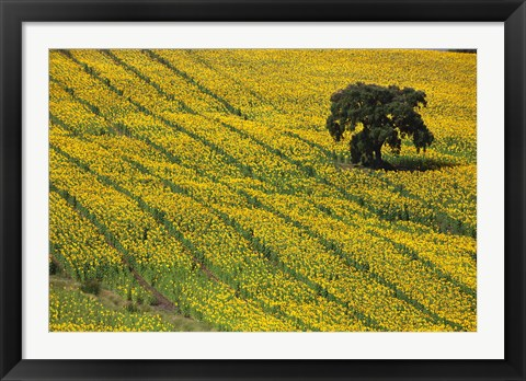 Framed Spain, Andalusia, Cadiz Province Lone Tree in a Field of Sunflowers Print