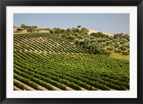 Framed Spain, Andalusia, Cadiz Province Vineyard Field and Olive Grove Print