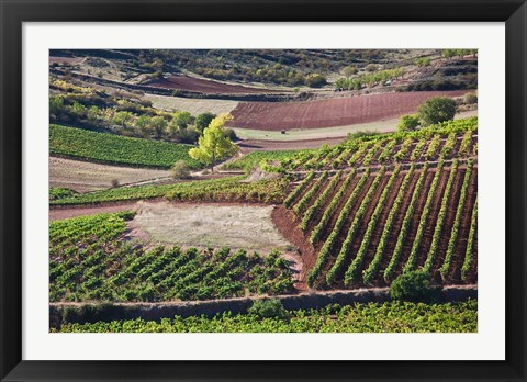 Framed Vineyards, Bobadilla, Spain Print
