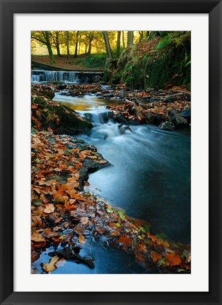 Framed Stream with Autumn Leaves, Forest of Dean, UK Print