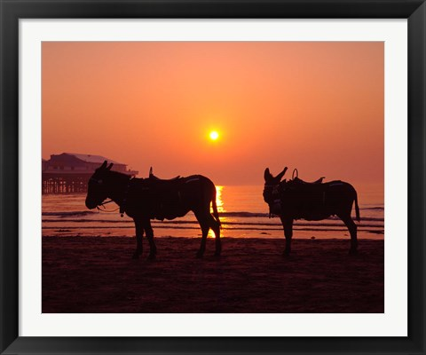 Framed Donkeys at Central Pier, Blackpool, Lancashire, England Print