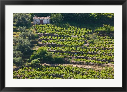 Framed Greece, Aegean Islands, Samos, Vourliotes Vineyard Print