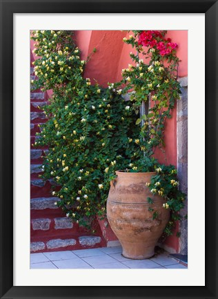 Framed Large Pot With Honeysuckle Vine, Santorini, Greece Print