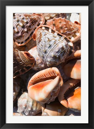 Framed Greece, Dodecanese, Rhodes, Seashells Print