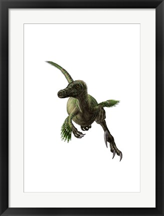 Framed Velociraptor, White Background Print