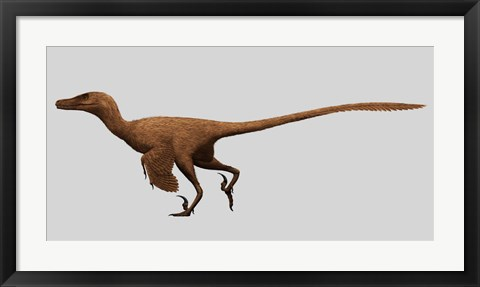 Framed Velociraptor Mongoliensis from the Cretaceous Period Print