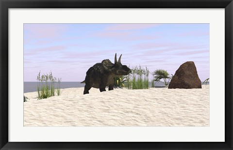 Framed Triceratops on a Beach Print