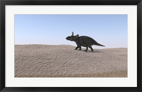 Framed Triceratops Walking across a Barren Landscape 3 Print