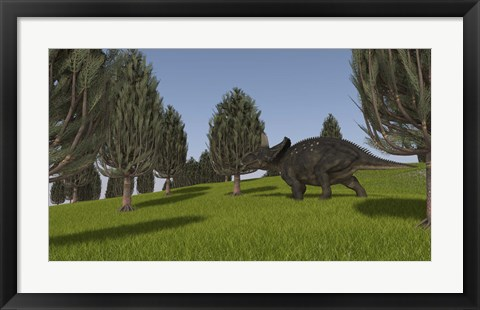 Framed Triceratops Walking across a Grassy Field 2 Print