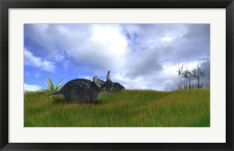 Framed Triceratops Walking across Prehistoric Grasslands Print