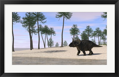 Framed Triceratops Walking along the Shoreline 3 Print