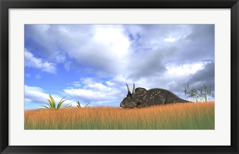 Framed Triceratops Walking through Tall Grass Print