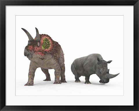 Framed adult Triceratops Compared to a modern adult White Rhinoceros Print