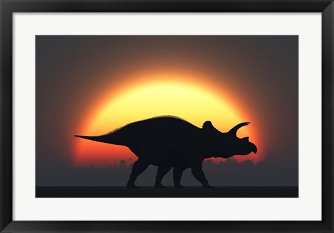 Framed Silhouetted Triceratops strolling Past a Setting Sun Print