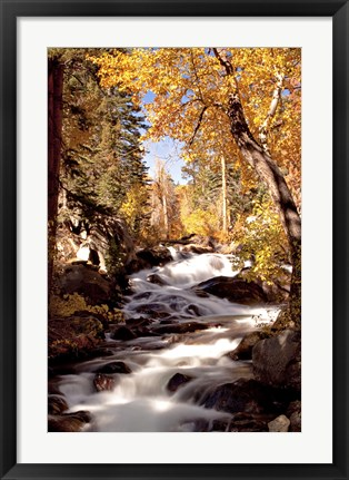 Framed River and Trees Print