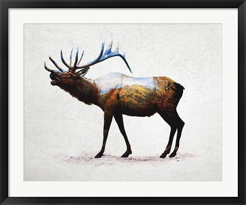 Framed Rocky Mountain Elk Print