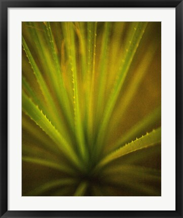 Framed California Monocot Print