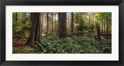 Framed Cathedral Forest Print