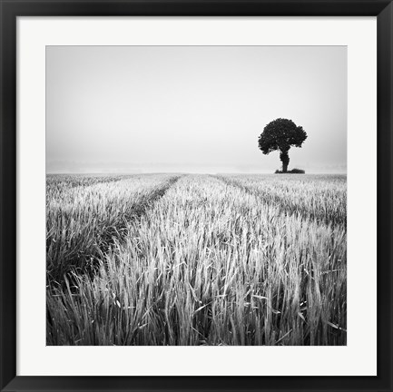 Framed Wheat Field Print