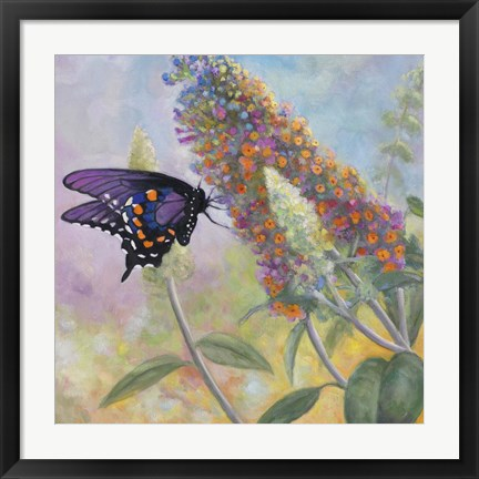 Framed Admiral Butterfly Print