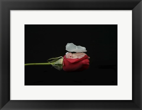 Framed Dennis Brandi Baby On Rose Print