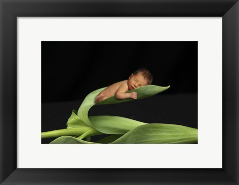 Framed T. Foucas Baby Leaves Print