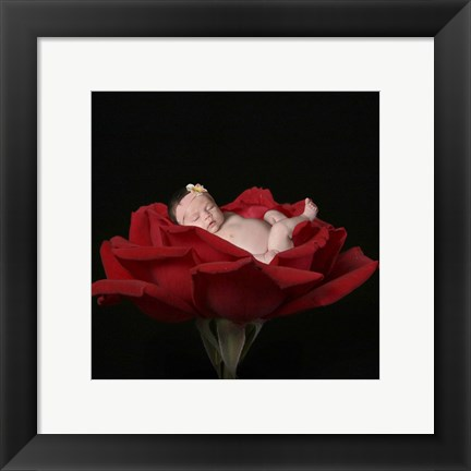 Framed Red Rose I Print