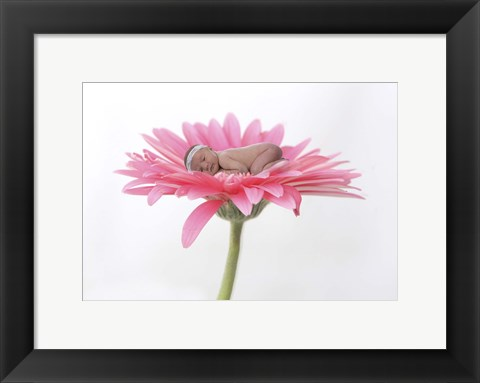 Framed Hovey Tanya Light Pink Daisy I Print