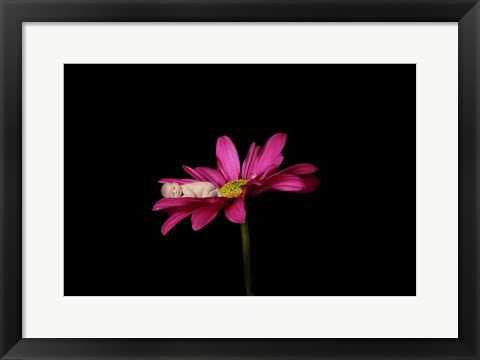 Framed Goble Baby Daisy Print