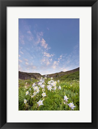 Framed Columbine Morning I Print