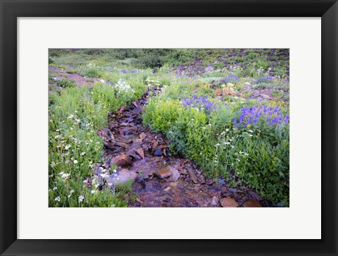 Framed Field of Beauty I Print