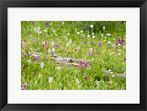 Framed Meadow Of Color Print