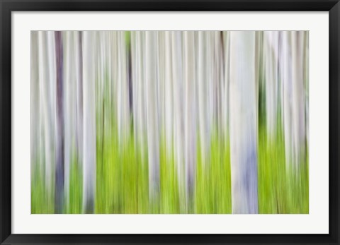 Framed Trees Print