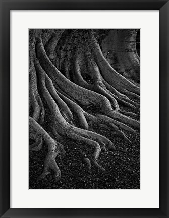 Framed Entrenched Print