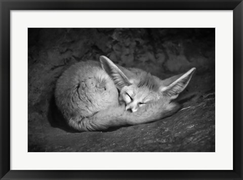 Framed Fennec Fox Print
