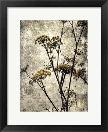 Framed Big Sur Yarrow II Print