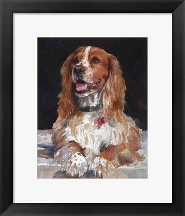 Framed Jack English Cocker Spaniel Print