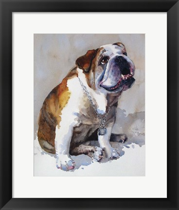 Framed Major Wembly E. Bull Dog Print