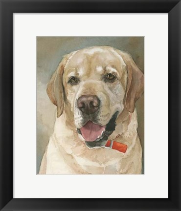 Framed Captain Yellow Lab Print
