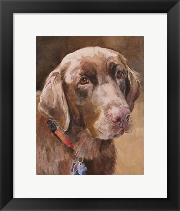 Framed Bell Chocolate Lab Print