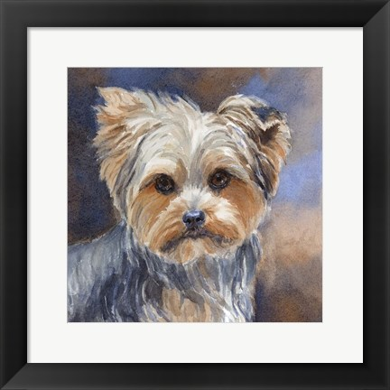 Framed Sadie Belle Yorkshire Terrier Print