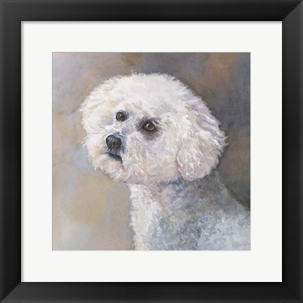 Framed Wee Willie Maltipoo Print
