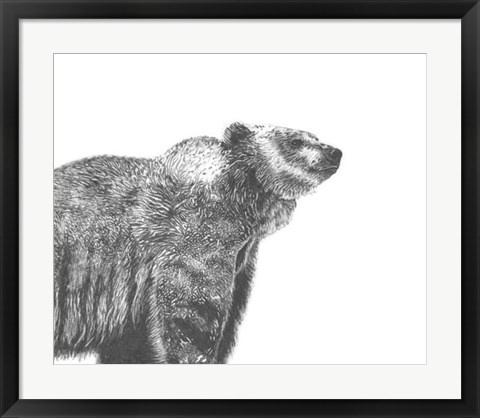 Framed Wildlife Snapshot: Grizzly Print