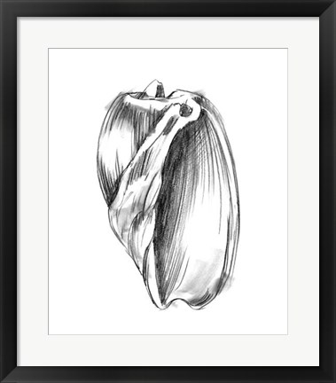 Framed Shell Sketch III Print