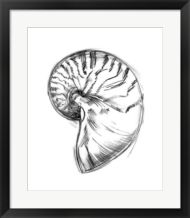 Framed Shell Sketch IV Print