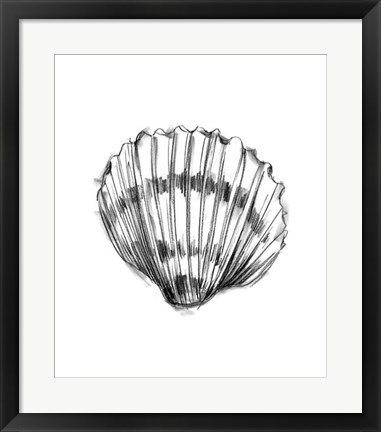 Framed Shell Sketch VI Print